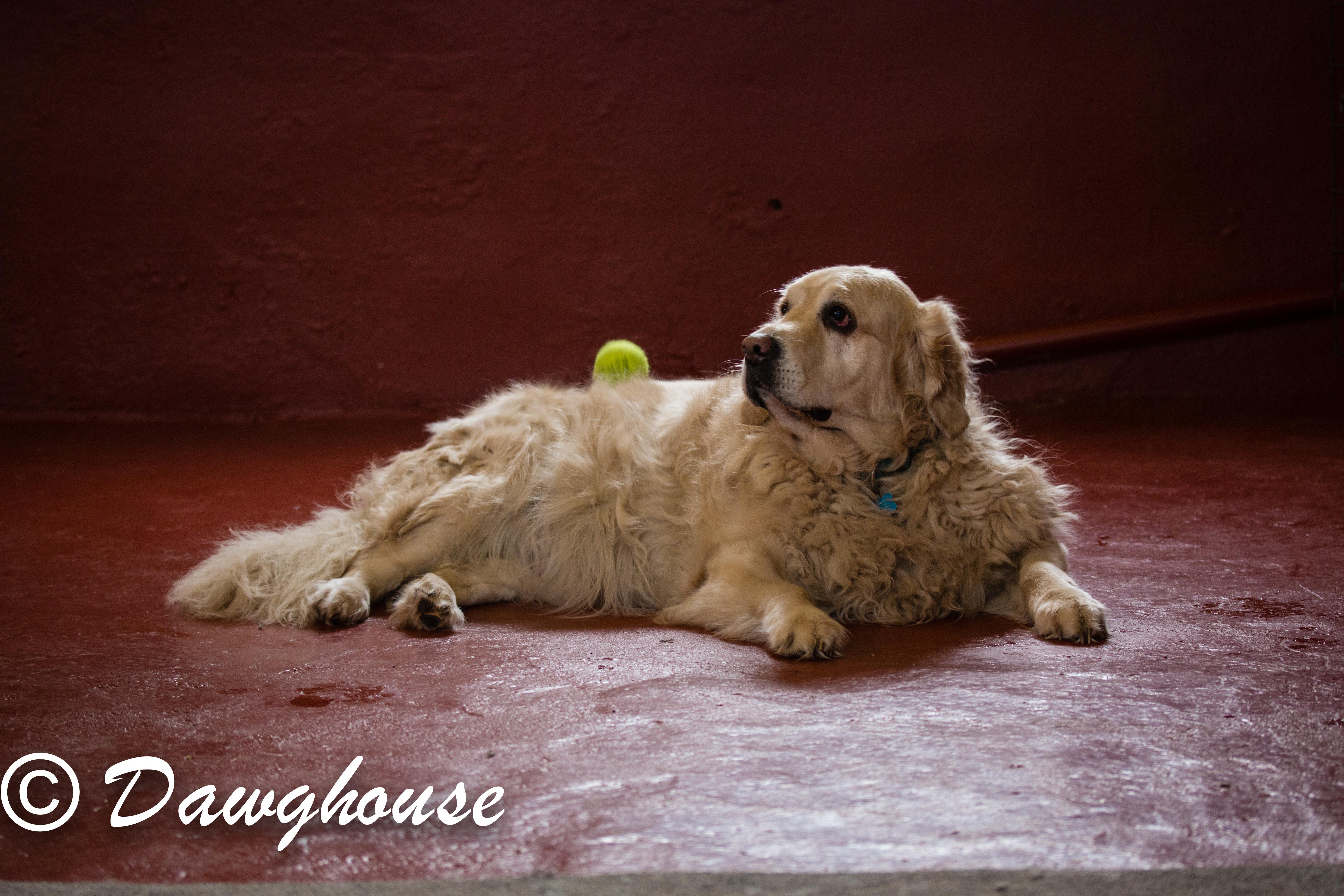 dawghouse feb-13