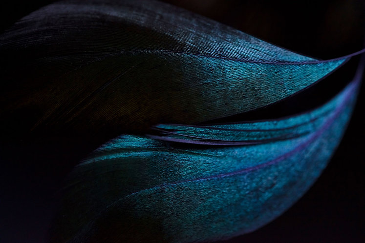 small-blue-feather.jpg