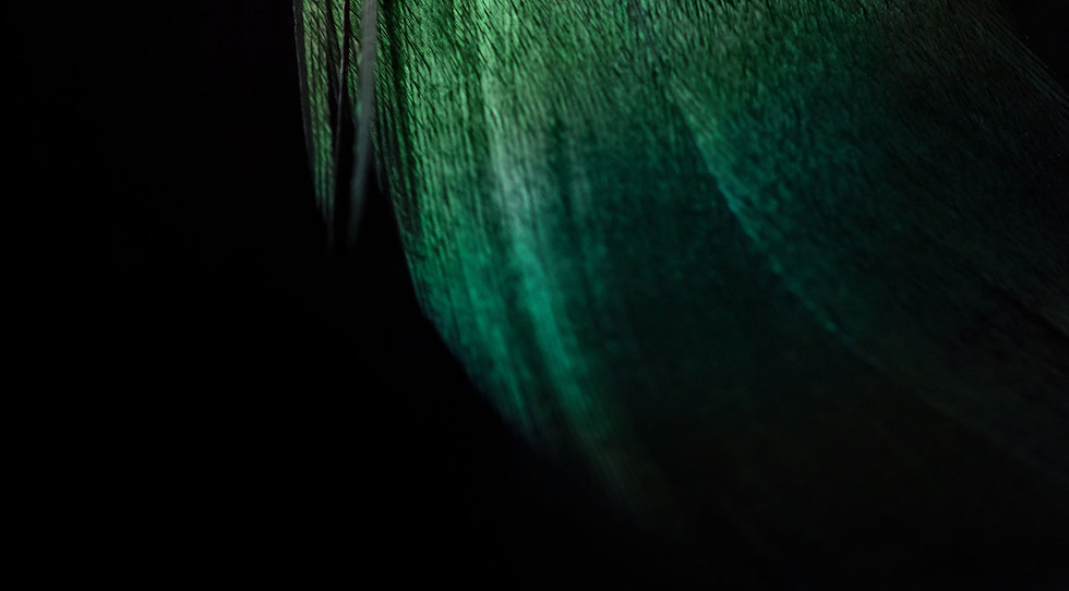 green-feather-small.jpg