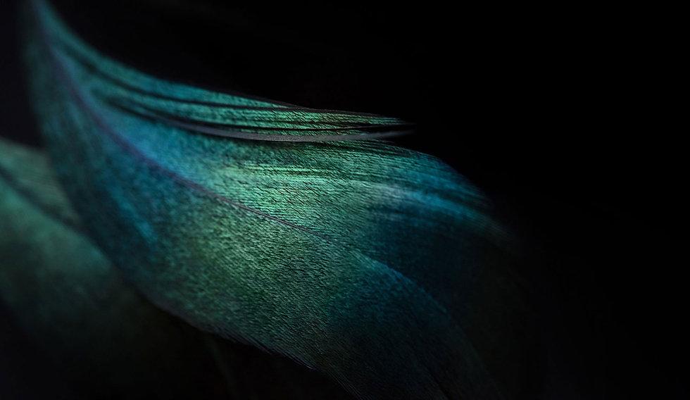mulitcolour-feather-left.jpg