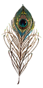 peacock-transformation-feather.png