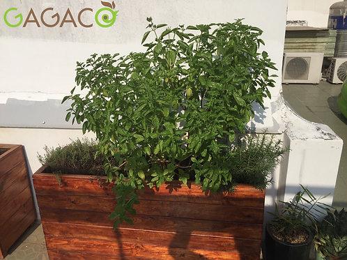 Chậu Gỗ | Planter Box L94.5xW21.5xH28cm