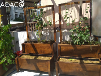 A variety of herbs in our trellis wooden planters