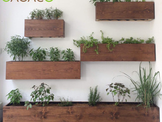 Wooden planters combo mounted to the wall