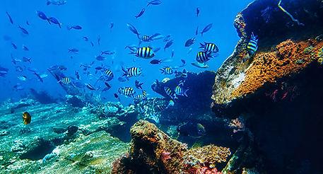 Dive in Haiti