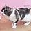 Thumbnail: 【貓癮零食】韓國 Cat Chup 啾嚕 貓點心 ciao肉泥(金槍魚)