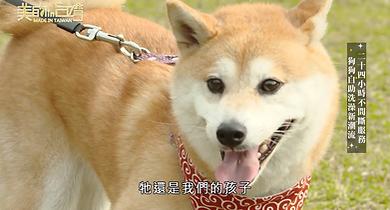 狗癮中天採訪
