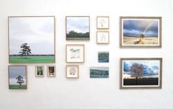 Treestories exhibition