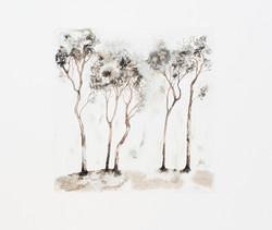 IB_Treestories_4-9989