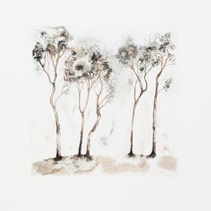 Treestories 2019