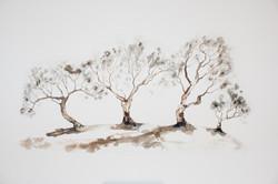 IB_Treestories_7-9995