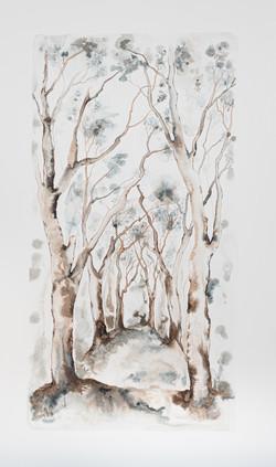 IB_Treestories_5-9990