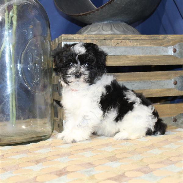 NJ Puppy Store Puppies for sale New Jersey 201-773-8280