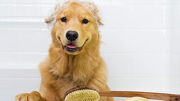 Dog Grooming in Passaic County - Nail Cutting, Ear Cleaning - NYC