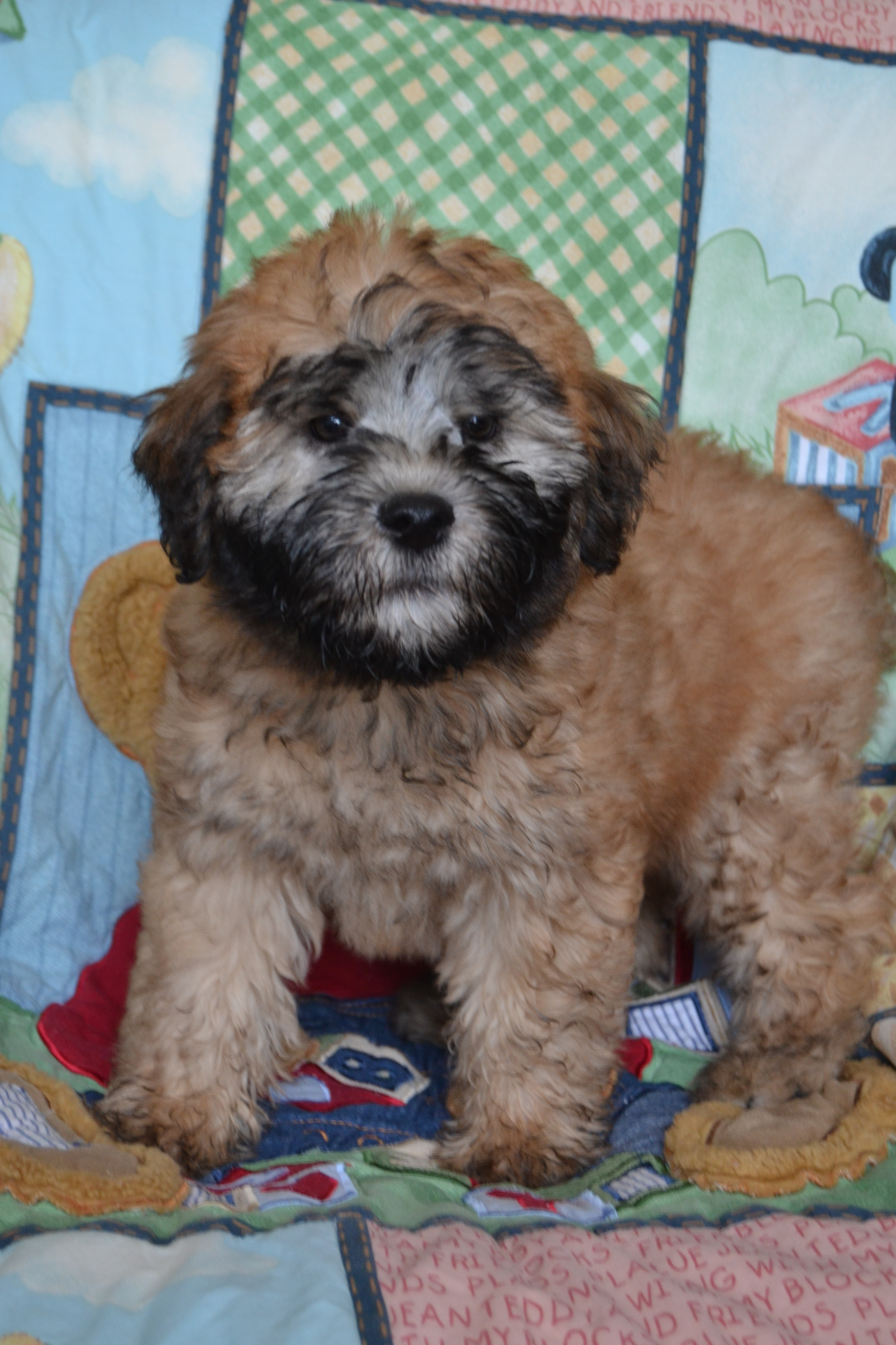 NJ Puppy Store Bergen County - New Jersey 201-773-8280