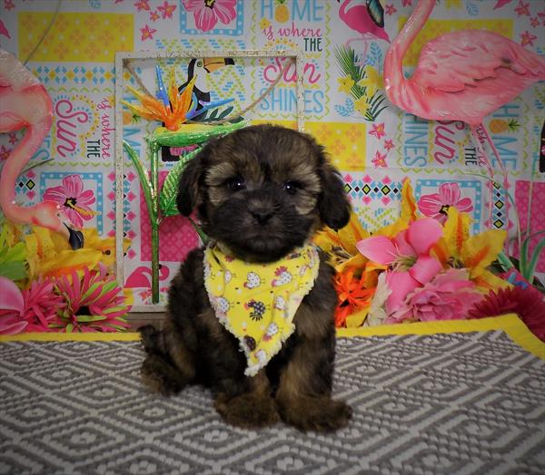Nj Puppy Store Puppies For Sale New Jersey 201 773 8280