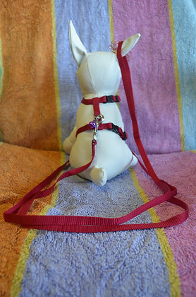 Red Harness and Leash
