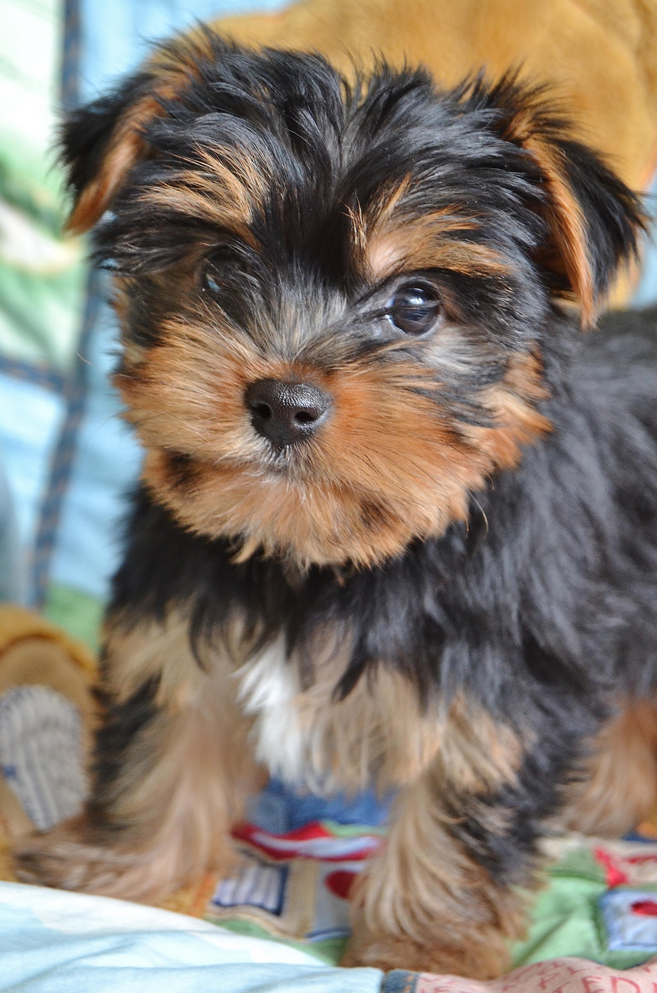 Nj Puppy Store Bergen County New Jersey 201 773 8280