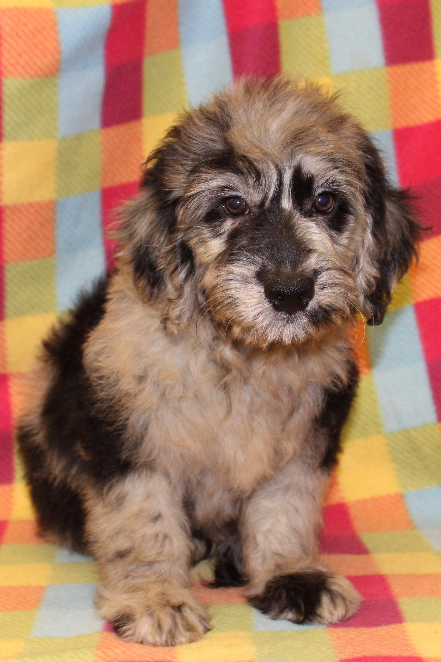 Puppies for Sale in Wayne, NJ Passaic County