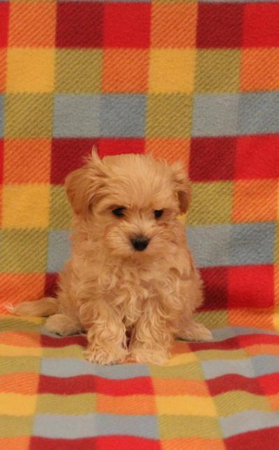 Puppies For Sale In Wayne Nj Passaic County