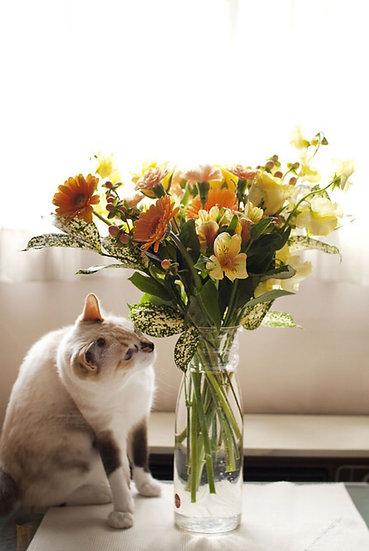 Feline Friendly Bouquet