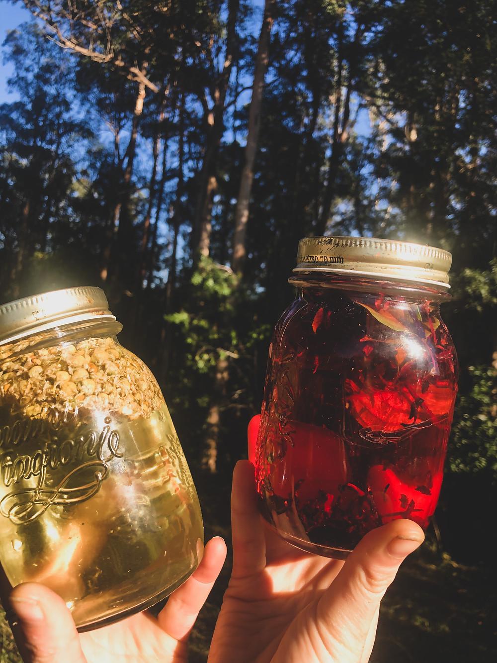 chamomile sun tea; tulsi and hibiscus sun tea recipe