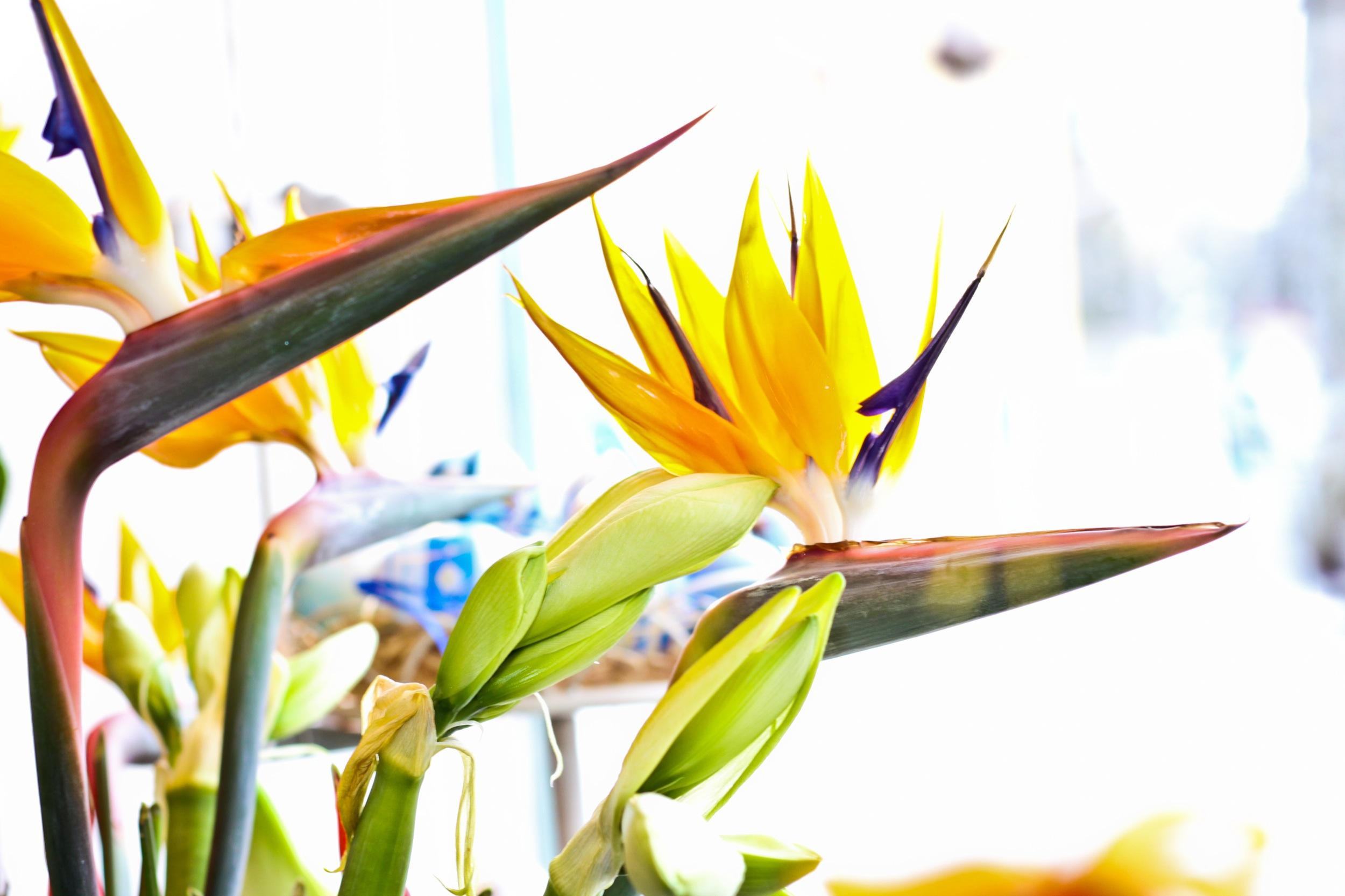 Blumenkistl_Oberwaltersdorf_-_Frühlingsblüten.jpg