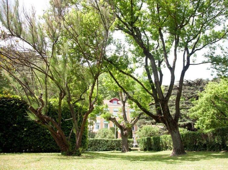 le-cedre-de-soyons-parc_5326.jpg