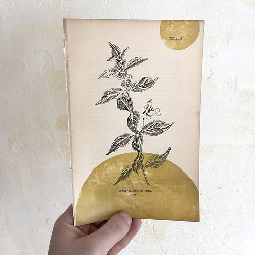 """Monkey Flower"" Block Print on Antique Page"