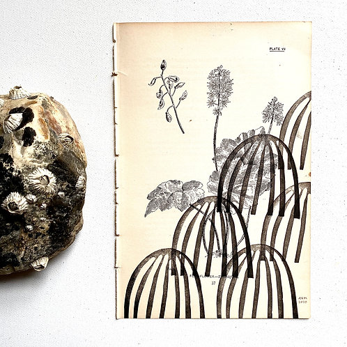 """Foam-Flower"" Block Print on Antique Page"