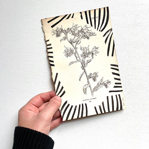 """Blueweed"" Block Print on Antique Page"