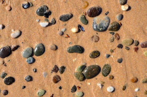 Bugs, Rocks, Wet Sand