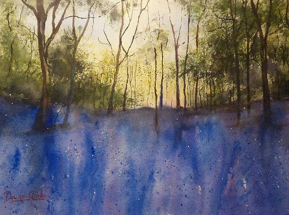 Bluebell Wood, Somerset