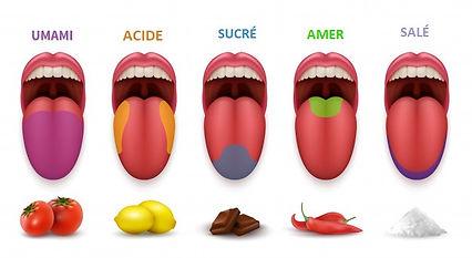 répartition des goûts sur la langue