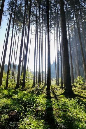 Forêt engagement environnemental