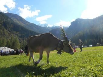 How the Austrian Alps stole my heart