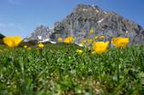 GALLERY: Austrian Alps' Awesomeness