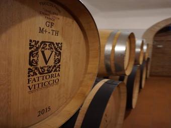 Tasting Tuscany's Treasure: Exploring the Wineries
