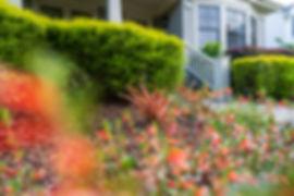 Sage-PhormiumFlax.jpg