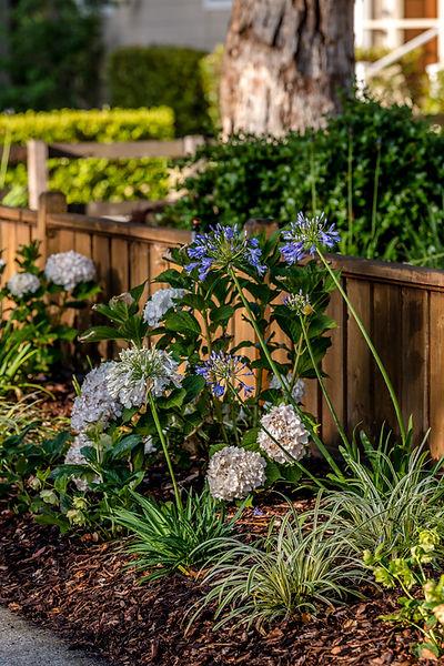 Miller-PlantsByFence.jpg