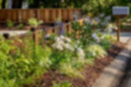 PlantsByFence2-miller.jpg