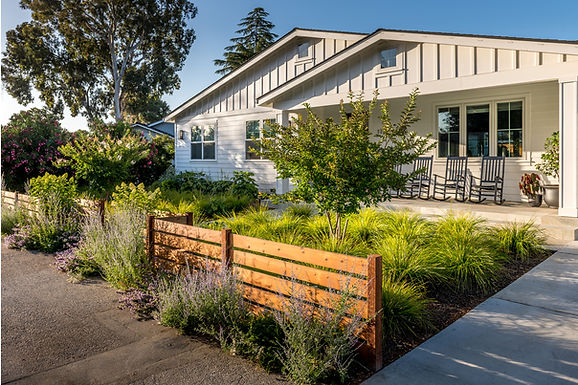 A lomandra meadow provides a drought tolerant, low maintenance lawn alternative.