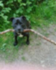 dog-2298854_1920.jpg
