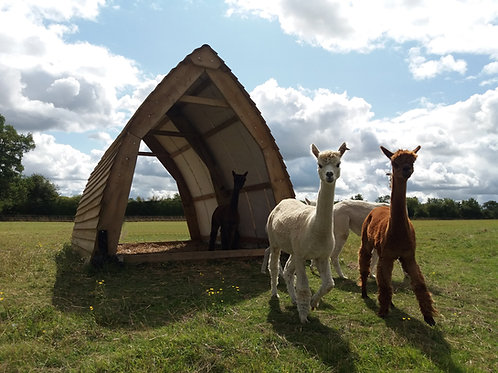 Alpaca Field Shelter Gothic Style 4.8m long, 3m wide, 3m high