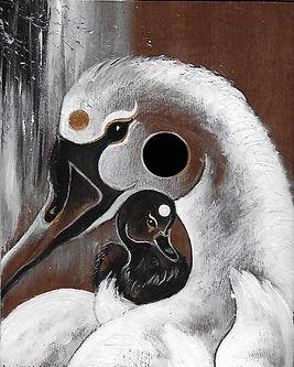 cygne illustration