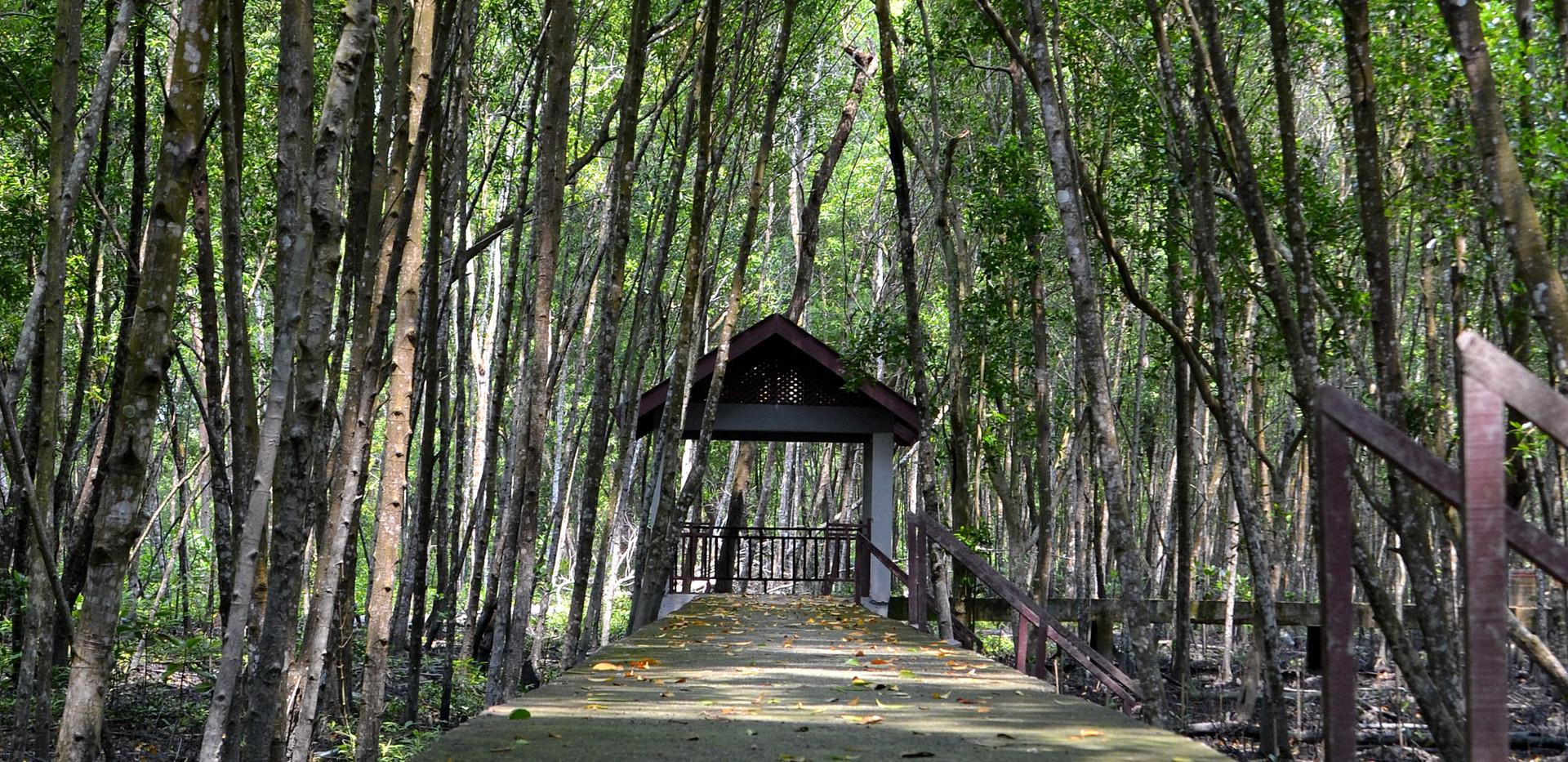 Beautiful Mangrove Tree Walkway in Kuala Selangor Nature Park