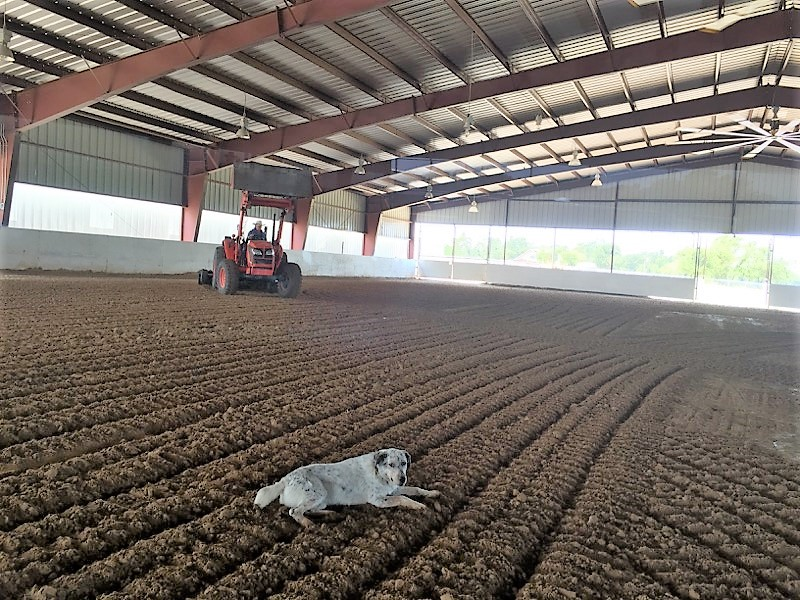 Barn Dog supervising the arena