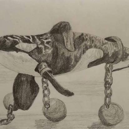 Orca captivity