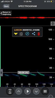 Hoary_spectrogram_03Jul20_10.15.jpg