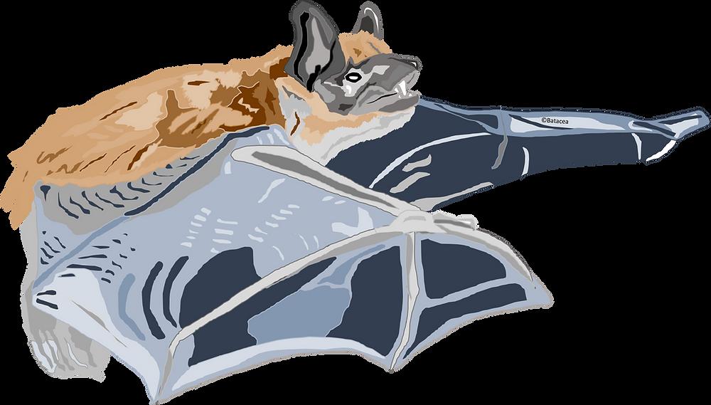 Digital drawing of big brown bat
